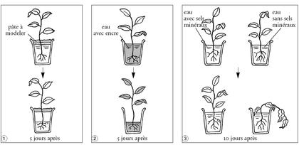 Les besoins d'une plante (1) - illustration 1