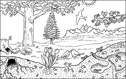 Un bosquet au printemps - illustration 1