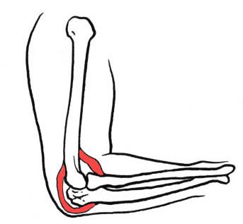 Les articulations des os - illustration 1
