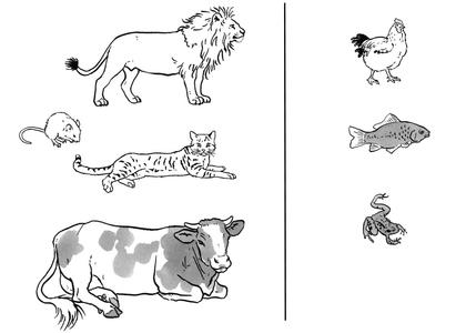 Ovipares et vivipares - illustration 1