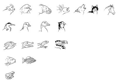 Les cinq groupes de vertébrés - illustration 1