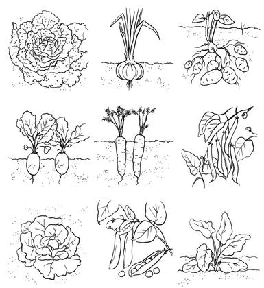 Les différents légumes (1) - illustration 1