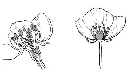 Qu'est-ce qu'une fleur ? - illustration 1