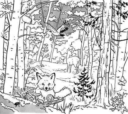 La vie dans la forêt - illustration 1