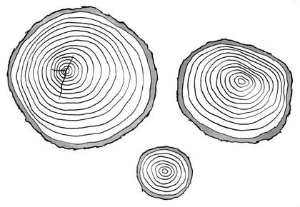 Coupes de troncs d'arbre de différents âges - illustration 1