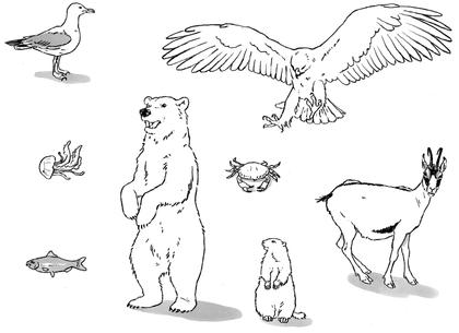 Animaux marins ou montagnards - illustration 1