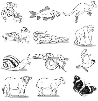 Comment les animaux se déplacent-ils ? - illustration 1