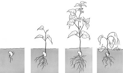 La croissance d'une plante - illustration 1