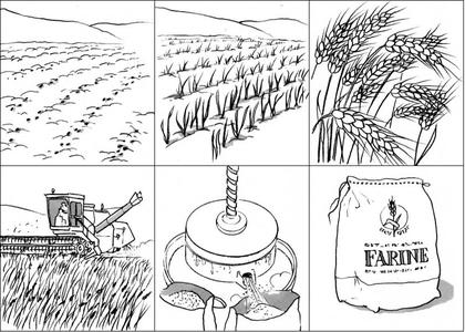 La transformation du bl en pain base documentaire en sciences ressources pour les - Coloriage farine ...