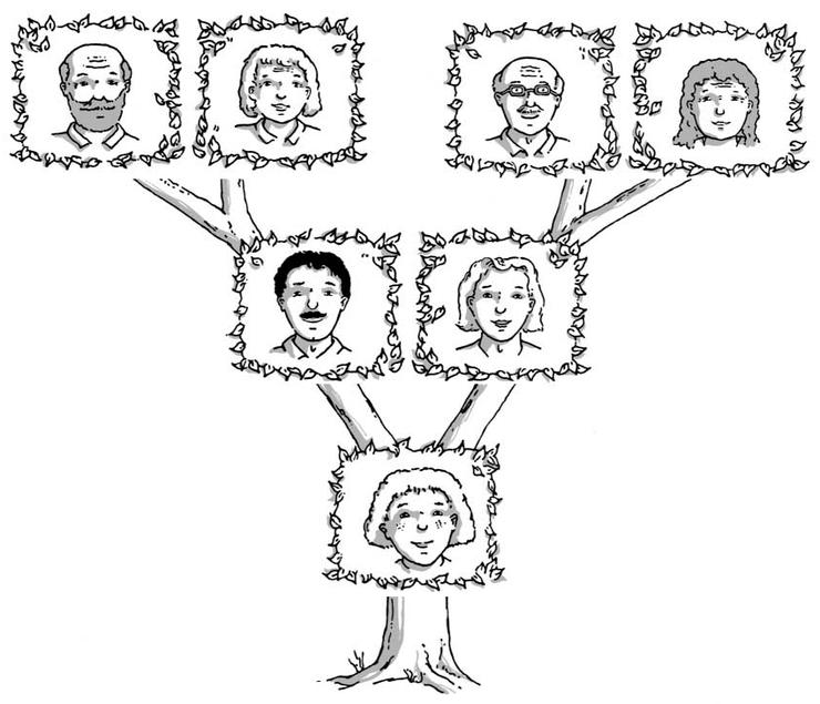 Un arbre généalogique - illustration 1