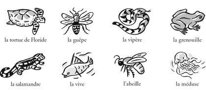 Les moyens de défense des animaux - illustration 1