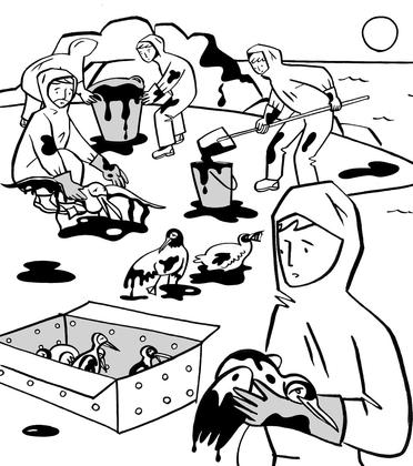 Les oiseaux, premières victimes des marées noires - illustration 1