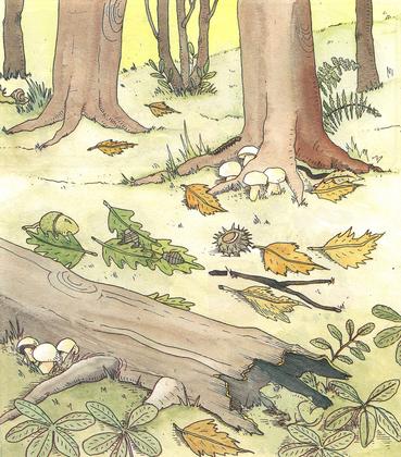 Le sol des forêts - illustration 1