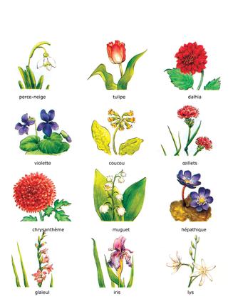 Les fleurs au fil des saisons - illustration 1