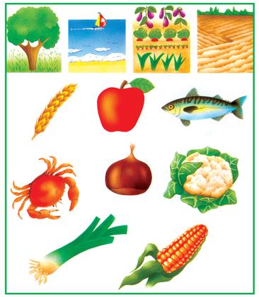 D'où viennent les aliments ? - illustration 1
