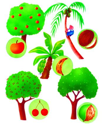 Les arbres fruitiers - illustration 1