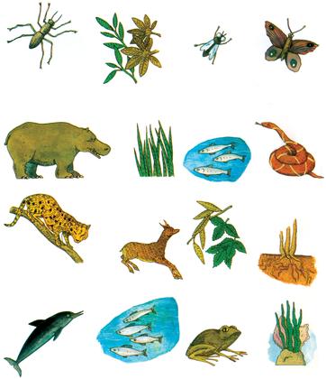 Le régime alimentaire des animaux (2) - illustration 1