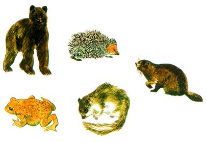L'hibernation des animaux - illustration 1