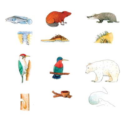L'habitat des animaux - illustration 1
