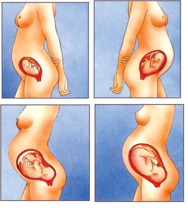 Le développement d'un bébé pendant la grossesse - illustration 1