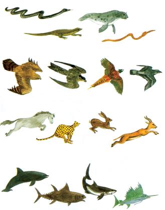Les animaux les plus rapides - illustration 1