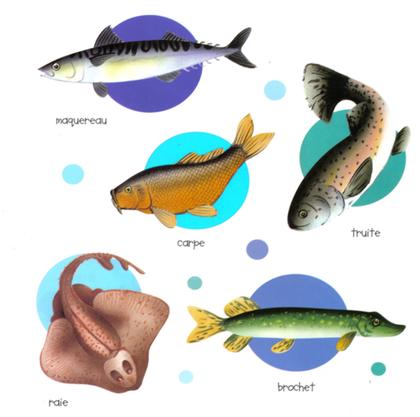 Poissons d'eau de mer et poissons d'eau douce - illustration 1