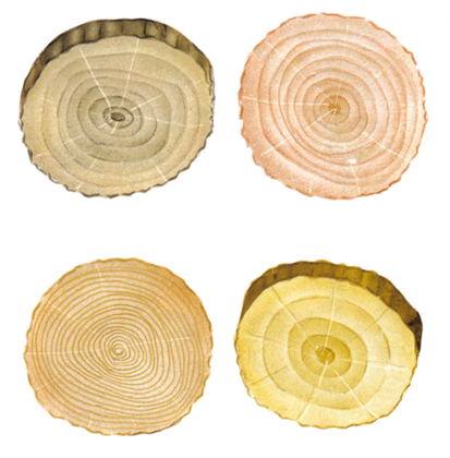 Composition et formation des troncs d'arbre - illustration 1