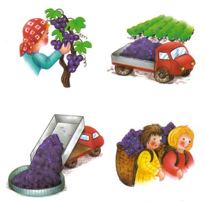 La viticulture - illustration 1