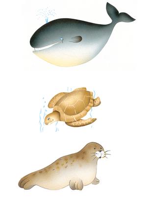 Quelques espèces marines - illustration 1