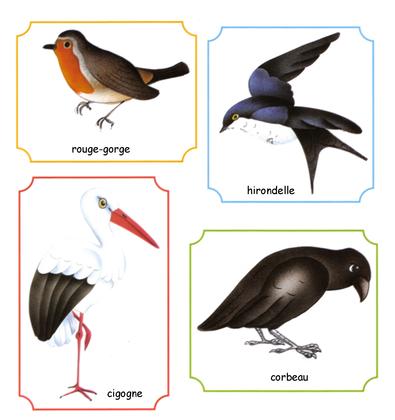 Oiseaux des régions tempérées - illustration 1