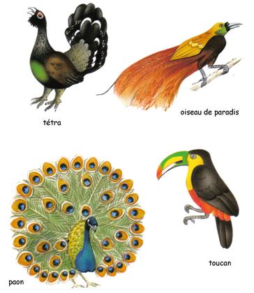 Oiseaux exotiques - illustration 1