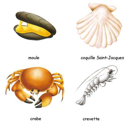Coquillages et crustacés - illustration 1
