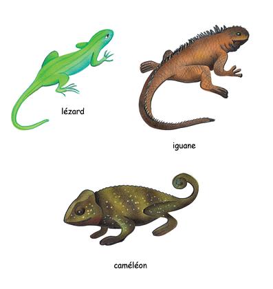 Les lézards - illustration 1
