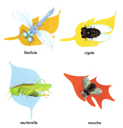 Les insectes - illustration 1