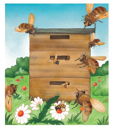 Les abeilles - illustration 1