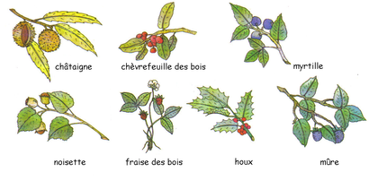 Les fruits sauvages - illustration 1
