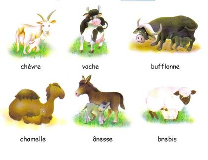 Les différents laits - illustration 1