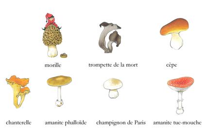 Champignons des forêts - illustration 1