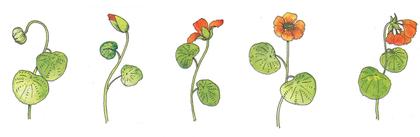 Du bouton à la fleur - illustration 1