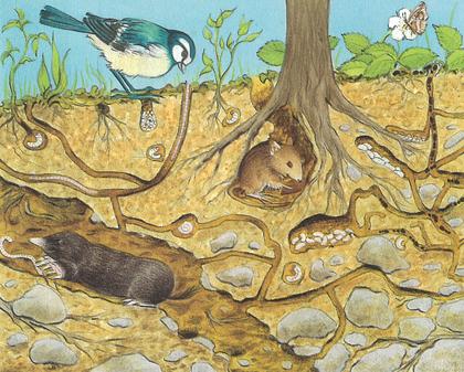 La vie sous la terre - illustration 1