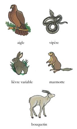 Les animaux montagnards (2) - illustration 1