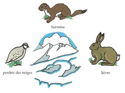 Les animaux qui changent de couleur en hiver - illustration 1