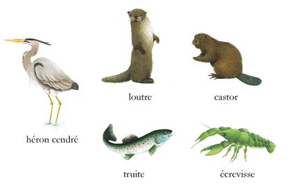Les animaux du bord de l'eau - illustration 1