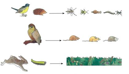 Carnivores, herbivores et insectivores - illustration 1