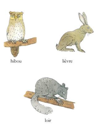 Les animaux nocturnes - illustration 1