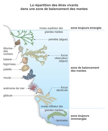 La répartition des êtres vivants dans une région côtière - illustration 1