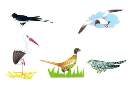 Les animaux migrateurs - illustration 1