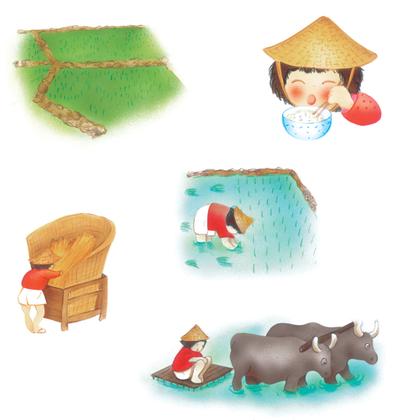 La culture du riz - illustration 1
