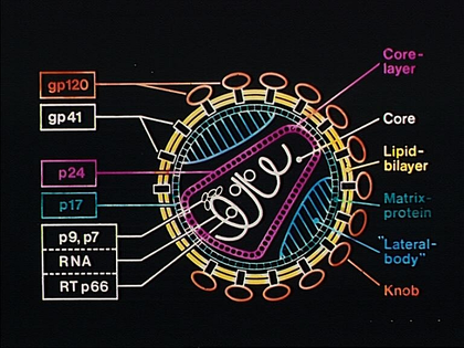 Structure du virus VIH - illustration 1