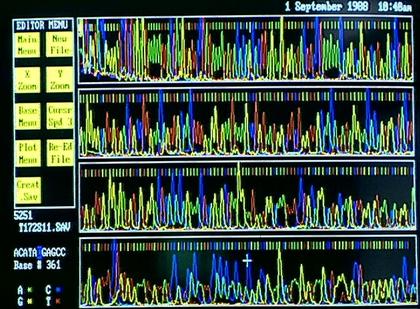 Séquence nucléotidique d'ADN - illustration 1